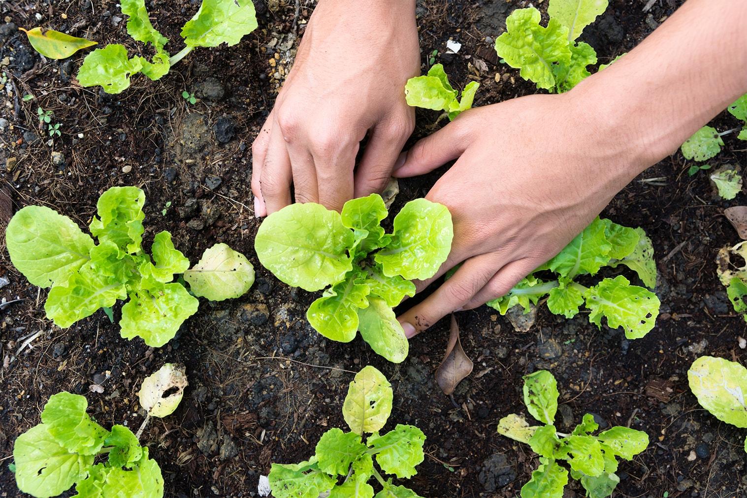 Une nouvelle agriculture